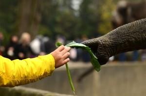 Für viele Flüchtlinge war es der erste Besuch in einem Zoo. Foto: Tim Eckhardt