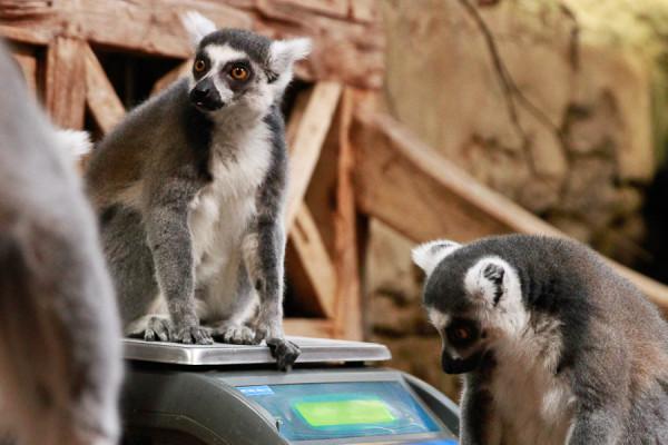 Für Tierpfleger und Fotografen brav sitzen bleiben. Foto: Mortiz Gerlach