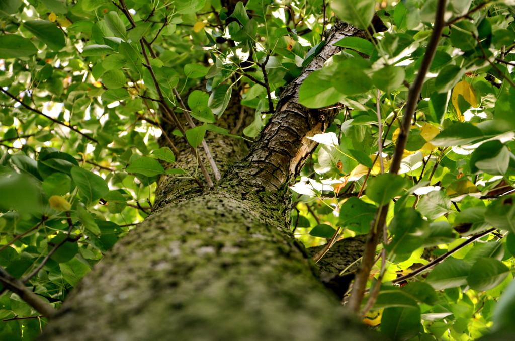 Bäumchen wechsle dich: mehr Bäume gefällt, weniger ersetzt