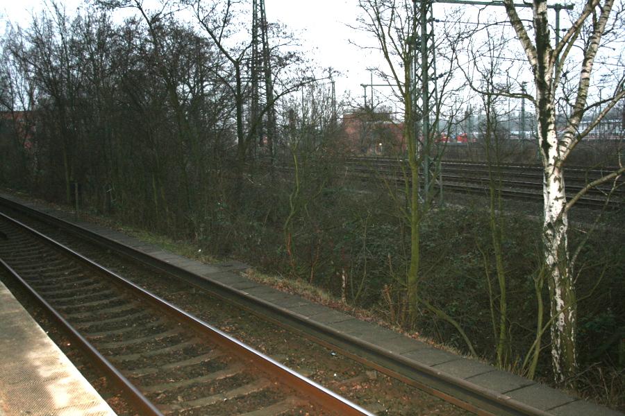 Streckensperrung: Bahn fällt Bäume