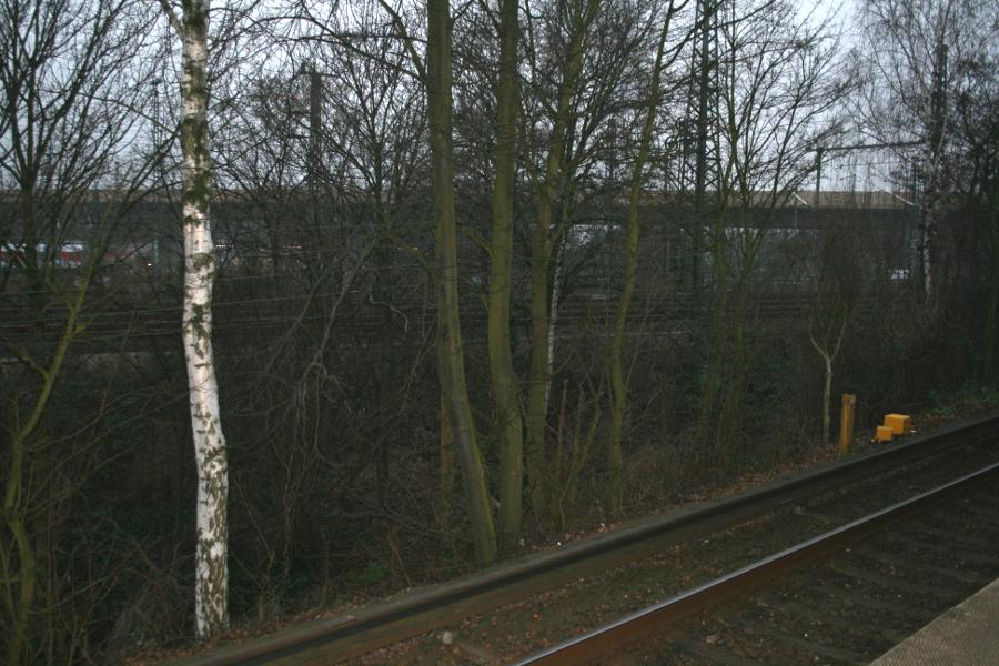 Bäume an der S3. Foto: Anja von Bihl