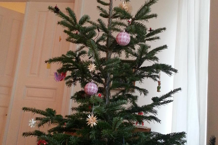 Am 5. Januar beginnt in der Hansestadt die Weihnachtsbaumsammlung der Stadtreinigung. Foto: Nora Helbling