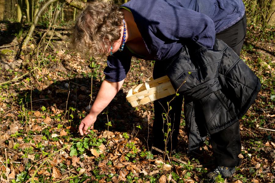 Lore Otto beim Knoblauchrauke ernten. Foto: Nicolas Döring