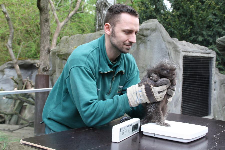 Bei der Inventur im Tierpark Hagenbeck werden auch kleine Tiere gewogen. Foto: Agathe Bogacz