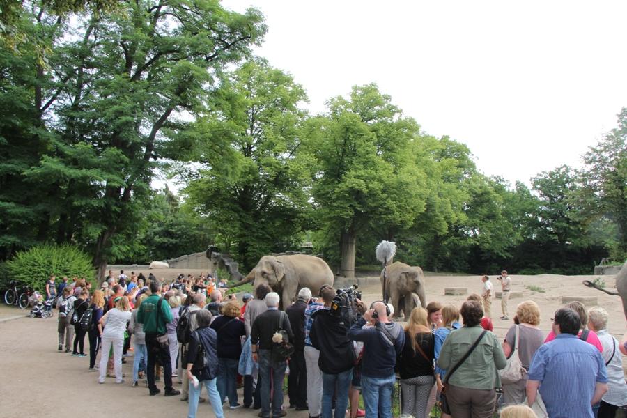 Großer Andrang am Elefantengehege. Foto: Lukas Gilbert