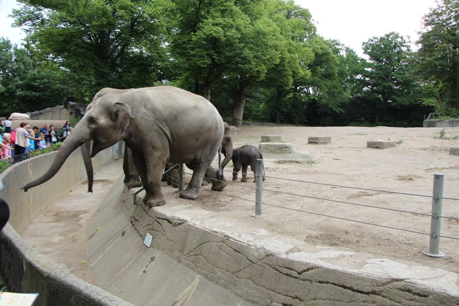 Manchmal traut sich das Elefantenbaby schon in Richtung Besucher. Foto: Lukas Gilbert