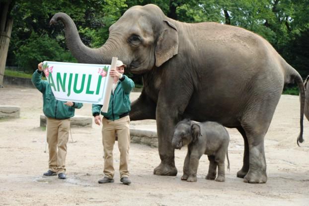 Das Elefantenbaby hat einen Namen. Foto: Lukas Gilbert