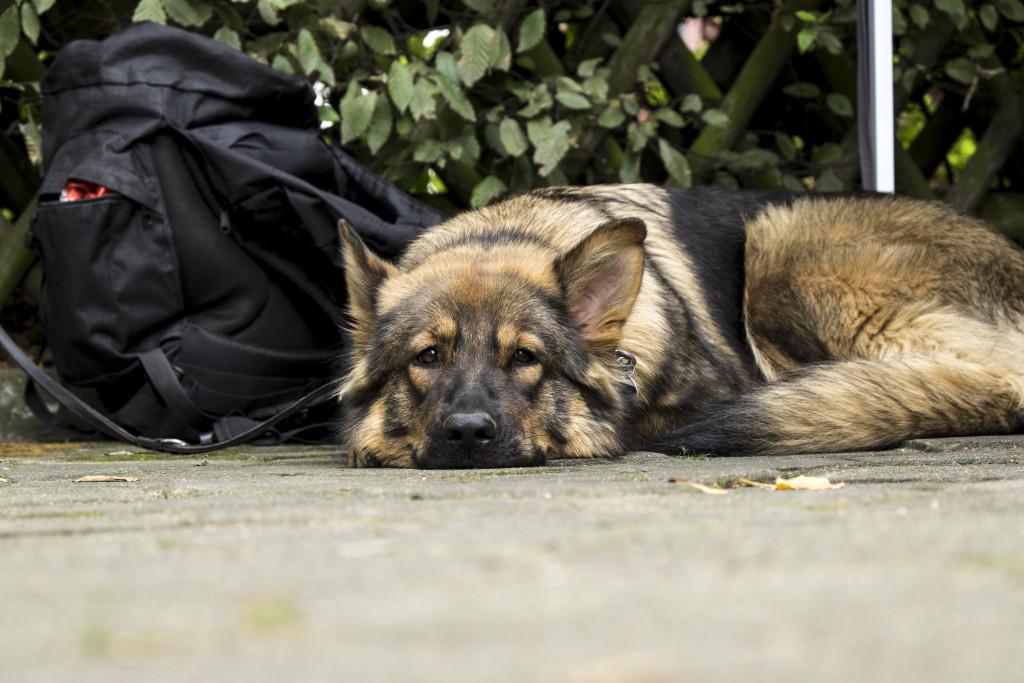 Die Tiertafel Hamburg unterstützt Bedürftige dabei, ihre Tiere zu versorgen. Foto: Dennis Imhaeuser.