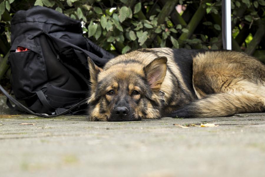 Die Tiertafel Hamburg unterstützt Bedürftige dabei, ihre Tiere zu versorgen. Foto: Dennis Imhaeuser