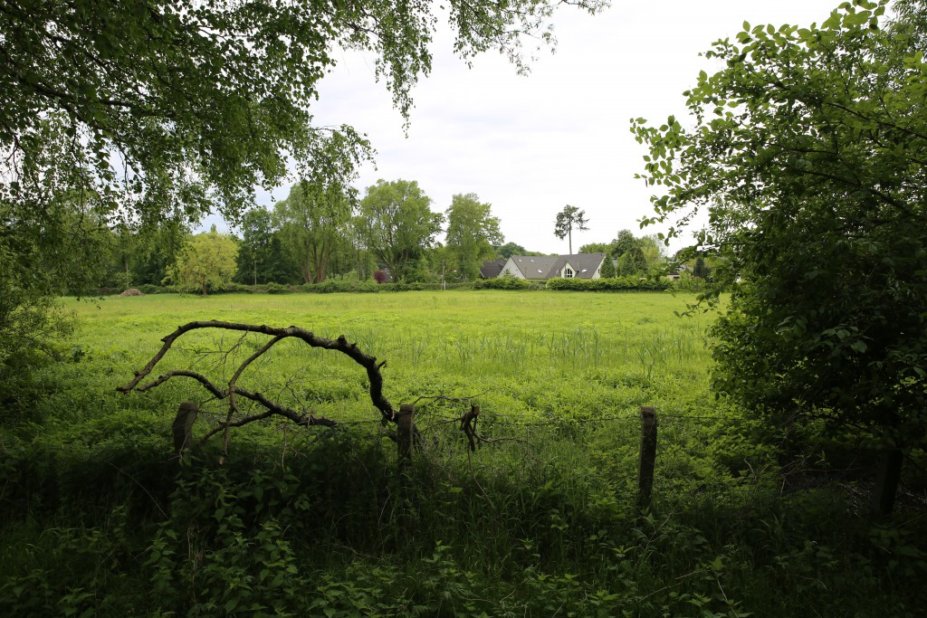 Auf der Grünfläche sollen Flüchtlingsunterkünfte entstehen. Foto: Bürgerinitiative Rettet den Hagendeel