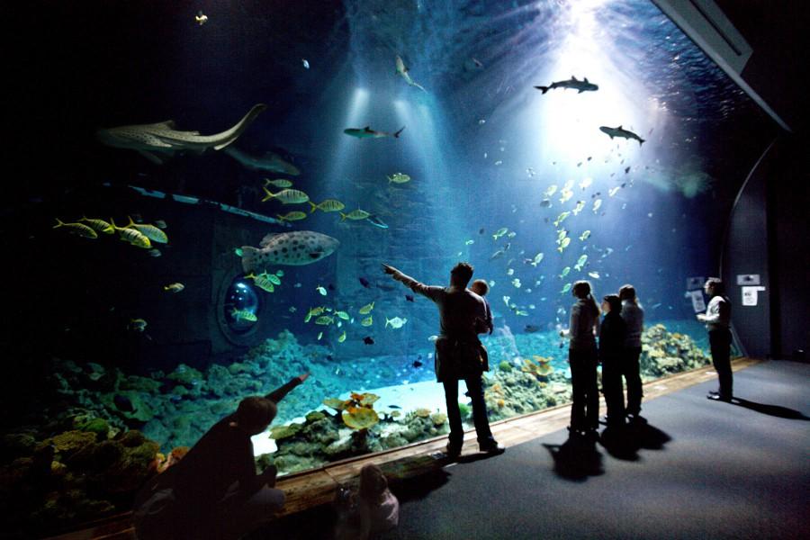 Die bunte Unterwasserwelt in Hagenbecks Tropenaquarium. Dort gibt es 14.300 Tiere aus 300 Arten zu entdecken. Verbringt hier einen spannenden Tag zwischen tropischen Fischen und afrikanischen Vögeln. Weitere Informationen Foto: Hagenbeck