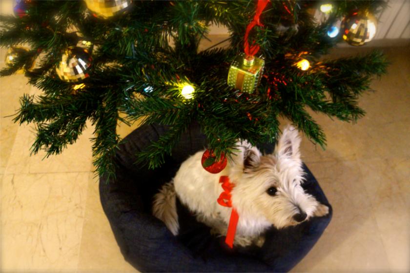 Haustiere unterm Weihnachtsbaum