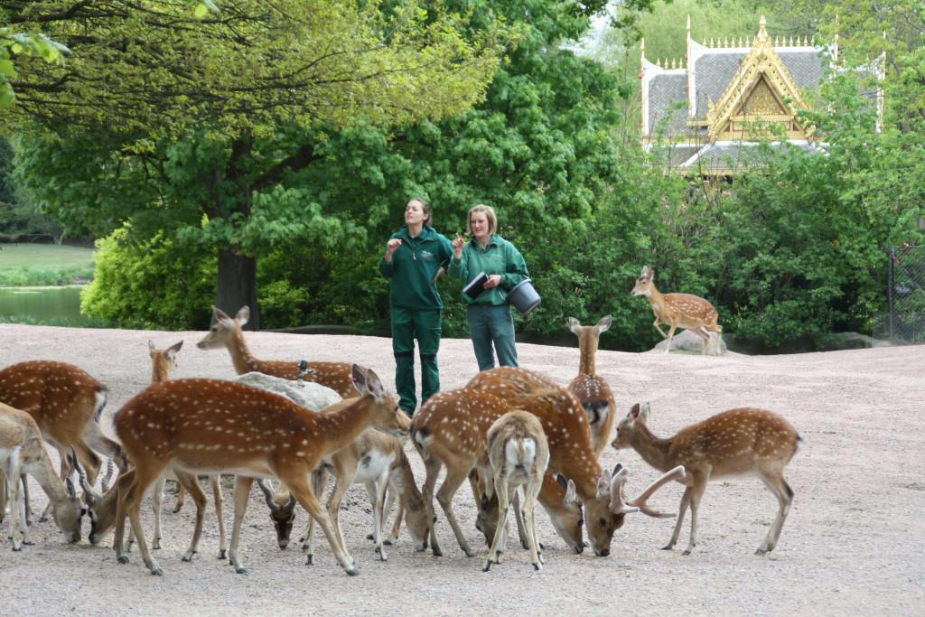 Im Wildpark Schwarze Berge können die Teilnehmer des Ferienprogramms die vielen Tiere bestaunen. Foto: Agathe Bogacz