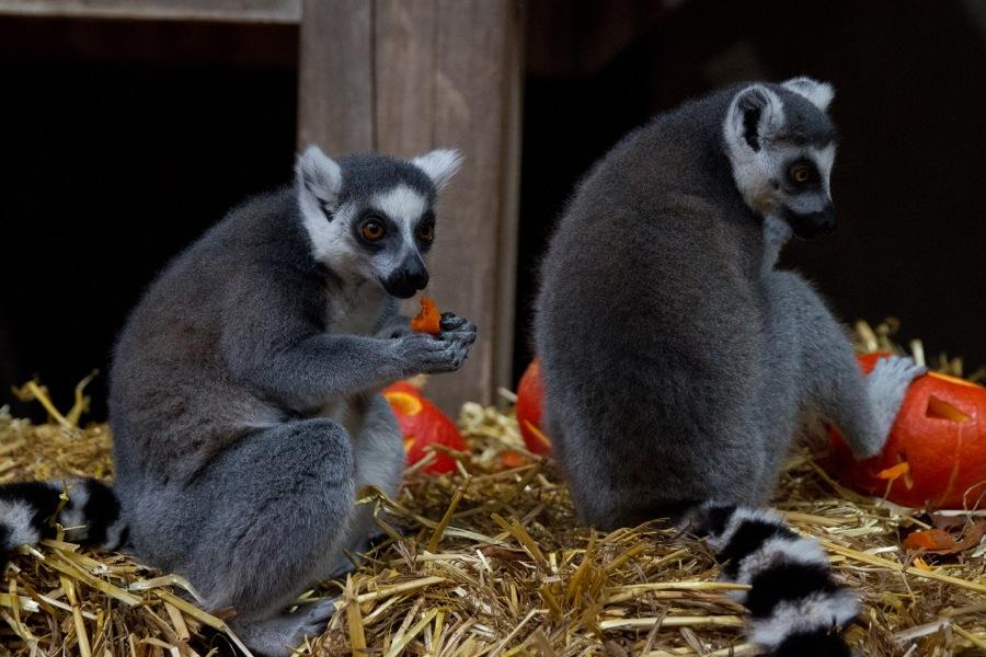 Grillen zwischen Kattas und Elefanten könnt ihr im Tierpark Hagenbeck. Für 30 Euro könnt ihr euch einen Grillplatz mieten. Foto: Ada von der Decken