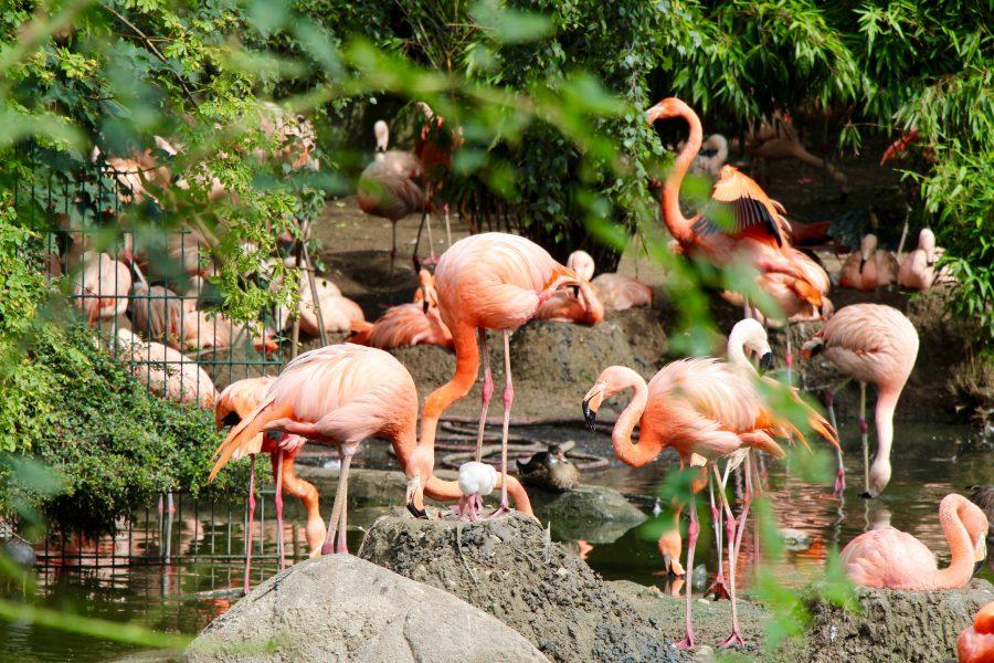 PETA stellt Strafanzeige gegen Hagenbeck