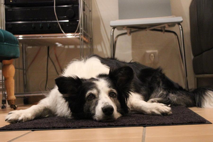 Der Hund Abby ist immer dabei. Foto: Jannika Grimm