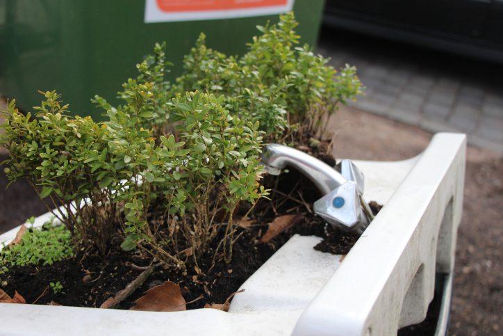 Urban Gardening und Hygiene