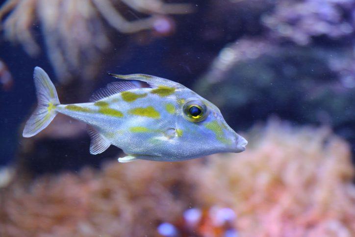 Auf 8.000 Quadratmetern leben verschiedene Fischarten, Quallen, Eidechsen und viele weitere exotische Tiere. Foto: Karoline Gebhardt