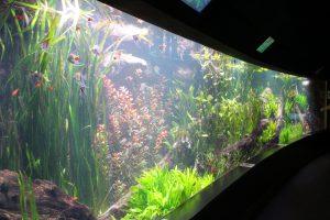 Im Tropen-Aquarium des Tierparks leben über 14.000 exotische Tiere an Land, im Wasser oder auch in Höhlen. Foto: Karoline Gebhardt
