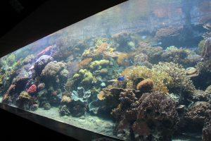 """Wie ist es um den Zustand der Meere bestellt? Was genau ist Korallenbleiche? Fragen wie diese werden bei den Vorträgen """"Tage der Meere"""" geklärt. Foto: Karoline Gebhardt"""