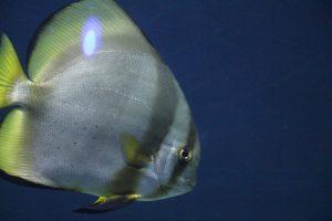 Die Fische schwimmen ihre Bahnen - und haben eine beruhigende Wirkung. Foto: Karoline Gebhardt