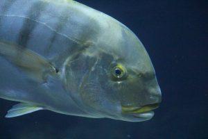 Im Hai-Atoll schwimmen verschiedene Fischarten. Es ist die größte Meerwasseranlage Europas. Foto: Karoline Gebhardt