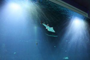 Das Hai-Atoll im Tropen-Aquarium: Es ist das Highlight. Kinder tummelten aufgeregt im Raum herum und pressten ihre Näschen an die Glasscheiben. Foto: Karoline Gebhardt
