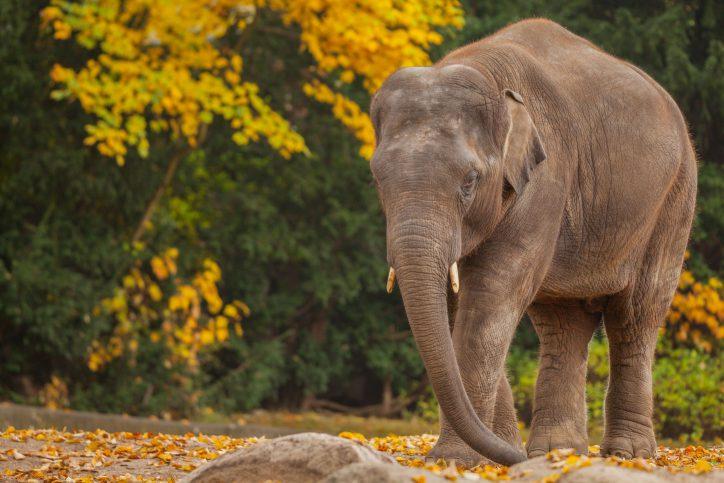 Gajendra im Herbst. Foto: Lutz Schnier