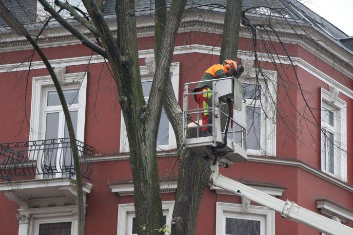 Zwar sollen zwei neue Bäume im Zuge der Umbaumaßnahmen gepflanzt werden – ersetzen können sie die alten Linden jedoch nicht. Foto: Ida Wittenberg