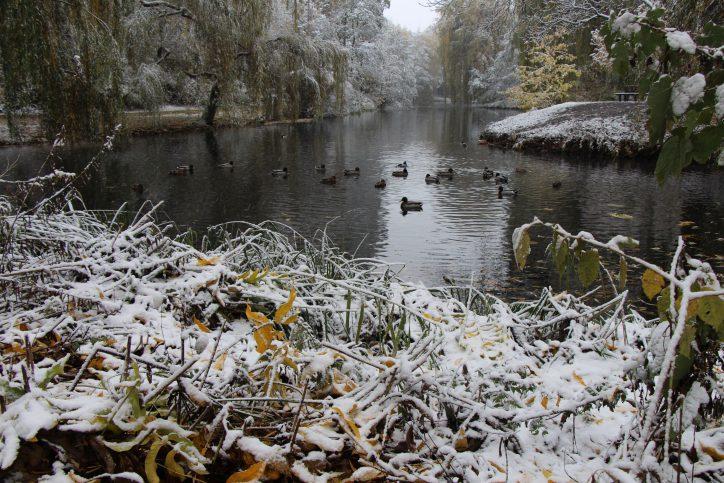 Das Federvieh scheint sich nicht über den Schnee zu ärgern. Foto: Karoline Gebhardt