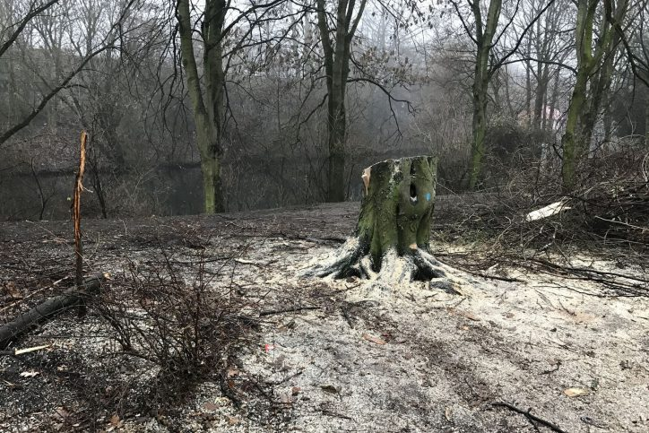 Weniger Bäume in Eimsbüttel