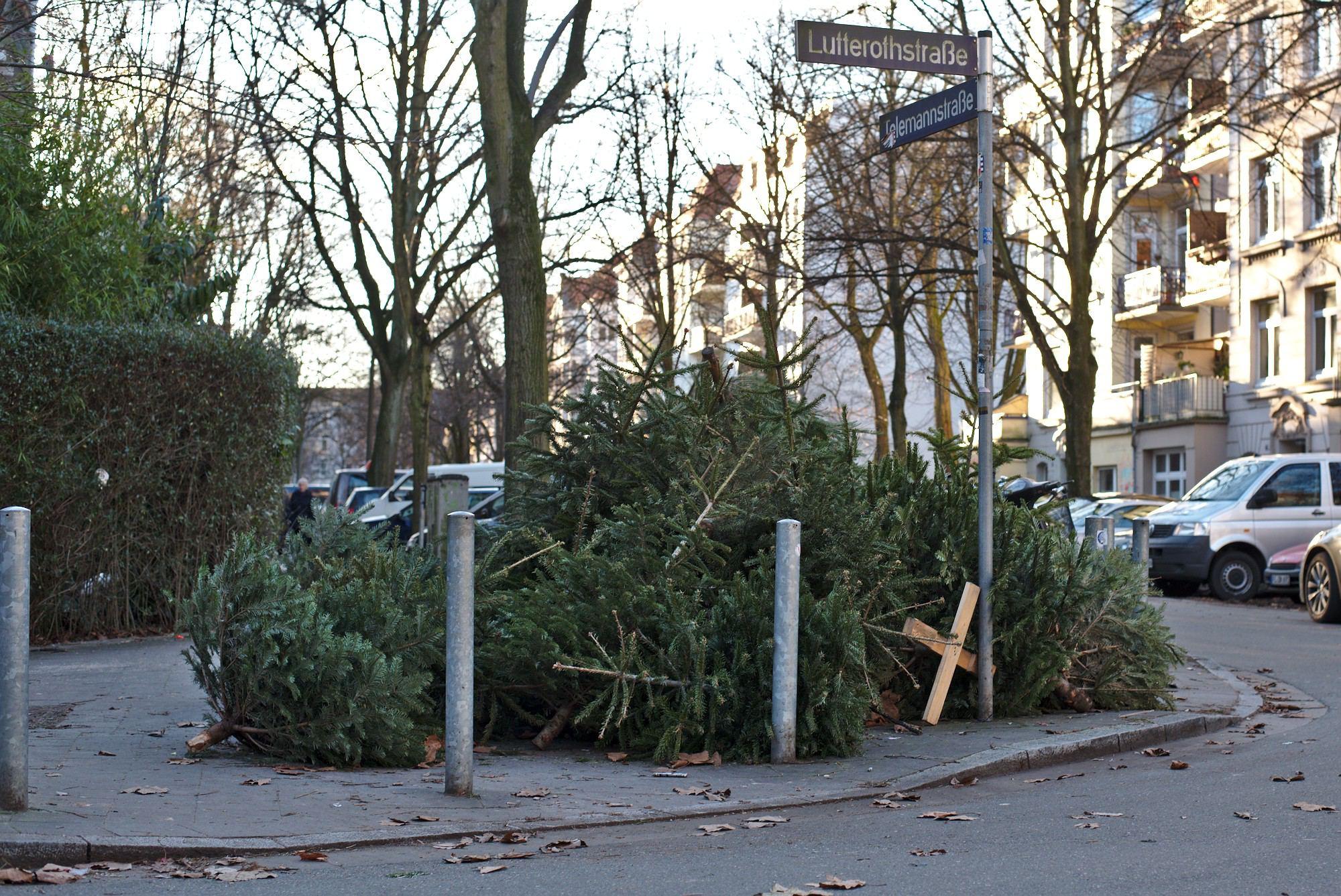 Stadtreinigung sammelt auch dieses Jahr wieder Weihnachtsbäume ein