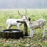 Eimsbüttels größtes Naherholungsgebiet besteht aus rund 150 Hektar Wald, 15 km Wegen zum Wandern und einem Damwildgehege. Vor allem auch Familien mit Kindern kommen dort auf ihre Kosten. Foto: Behörde für Umwelt und Energie, Hamburg