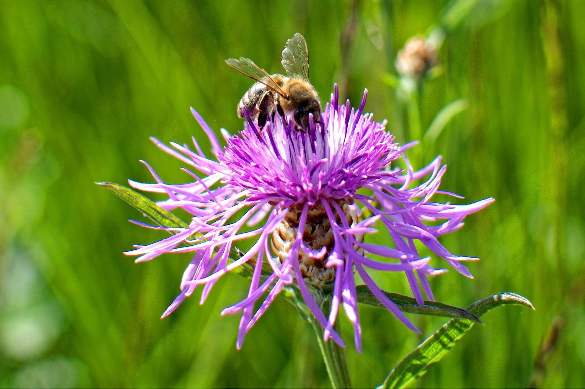 wildbienen mehr bl mchen f r die bienchen eimsb tteler nachrichten. Black Bedroom Furniture Sets. Home Design Ideas