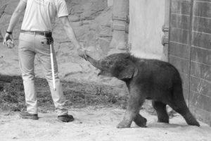 Das Elefantenbaby Püppi war nur zehn Tage alt. Foto: Samantha Tirtohusodo