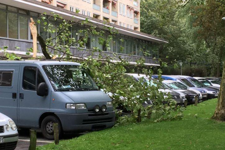 Am Grindel verfehlte ein herabfallender Ast nur knapp einen Transporter. Foto: Eimsbütteler Nachrichten.