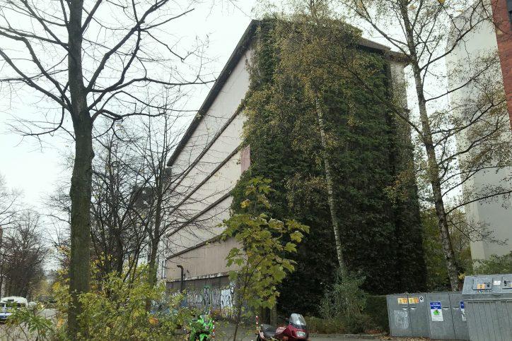 Die eine Seite des Bunkers ist völlig zugerankt. Foto: Fabian Hennig