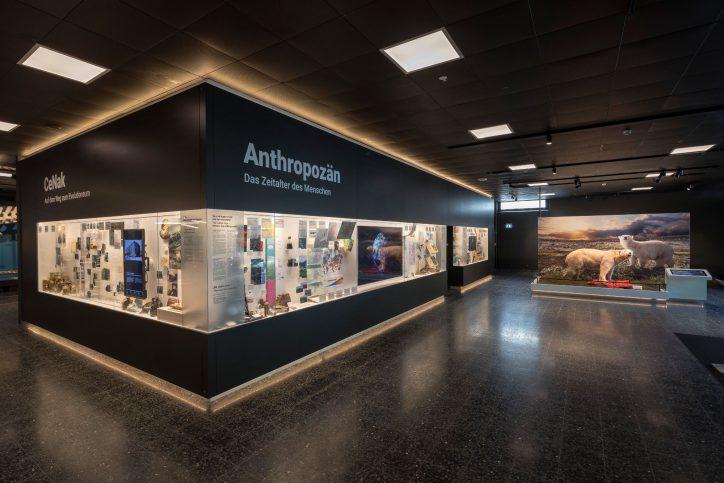 Der im Frühjahr 2017 umstrukturierte Eingangsbereich des Zoologischen Museums zeigt erste inhaltliche Ideen für ein neues Naturkundemuseum. Foto: UHH, RRZ/MMC,Mentz