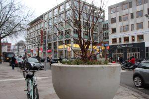 Bäume am Heußweg Kreisel. Foto: Samantha Tirtohusodo