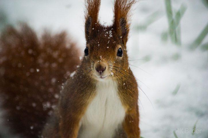 Eichhörnchen. Foto: AK Bilder