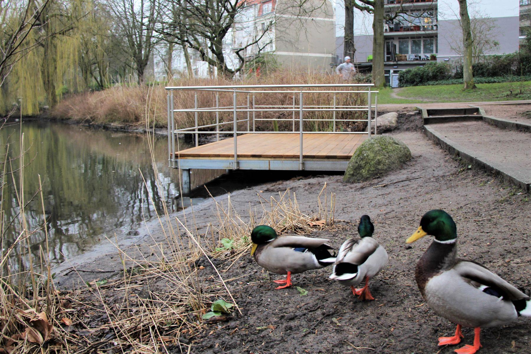 Der neue Steg am Weiher wird von den Enten begutachtet. Foto: Marianne Bruhns