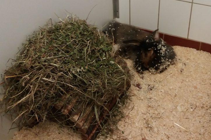 Franziskus Tierheim Hundevermittlung