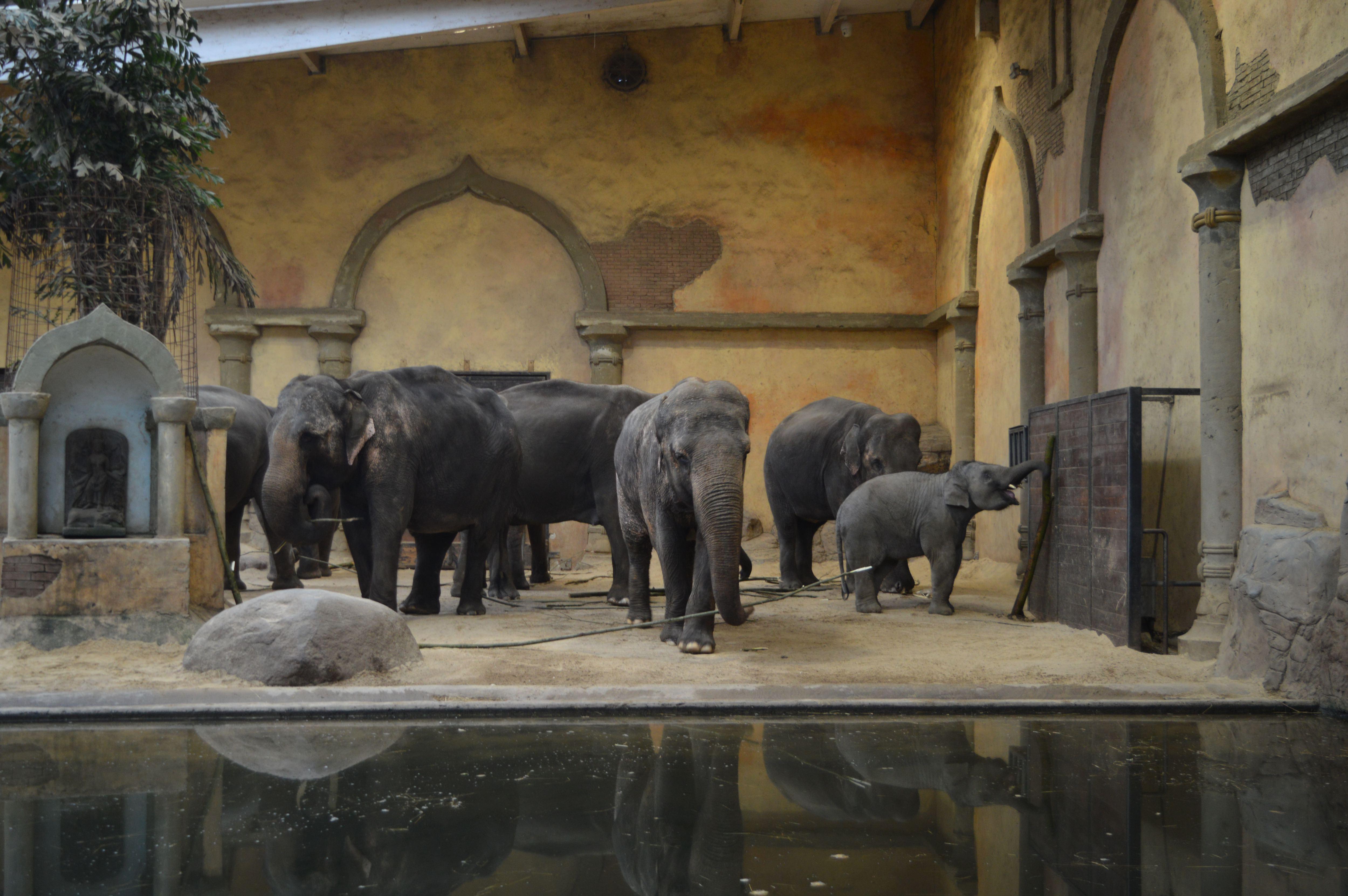 Die Elefanteherde feierte Kandys 15. Geburtstag. Foto: Margarita Ilieva