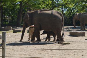 Der kleine Brausepaul schreitet mutig voran neben Mutter Shila. Foto: Margarita Ilieva