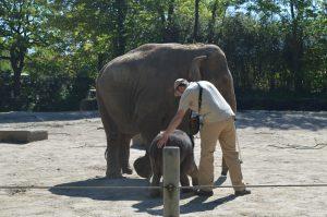 Er darf dennoch nicht zu nah an den Zaun rankommen, darauf achtet sein Pfleger. Foto: Margarita Ilieva