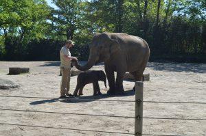 Gut gemacht, Shila! Die Elefantenkuh und ihr Baby werden mit Liebe und Vorsicht umsorgt. Foto: Margarita Ilieva