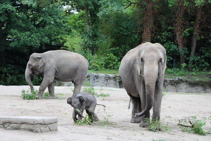 Elefantenmädchen Anjuli gestorben