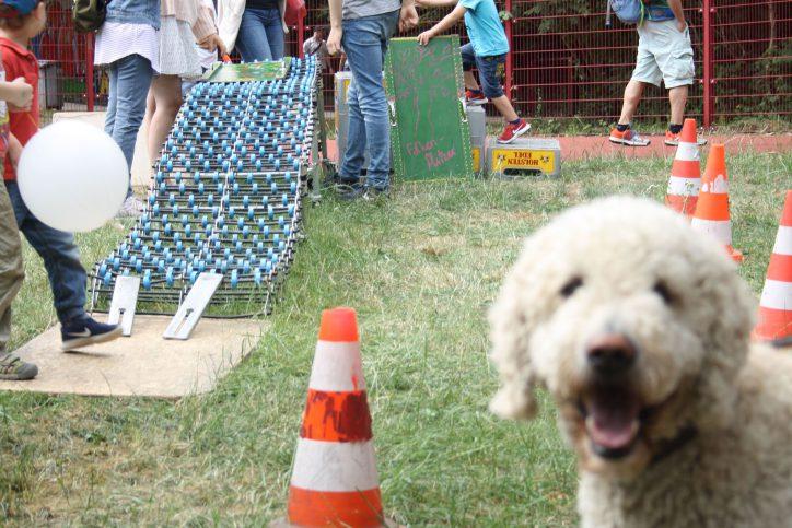 Auch der Hund war begeistert von der selbstgebauten Rutsche. Foto: Monika Dzialas