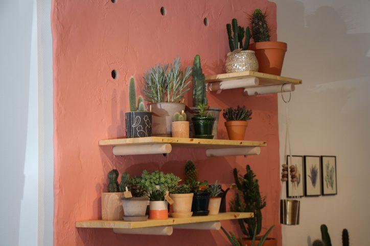 """""""Kleiner Kaktus"""": Kakteen für Eimsbüttel"""