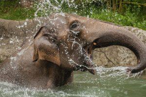 Elefantenbad Hagenbeck